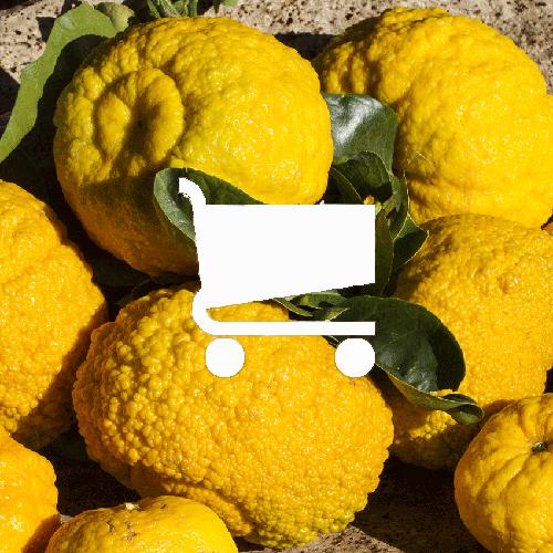 Online Shop di Panecarasau.org | Prodotti di Pompia del Presidio Slow Food di Siniscola